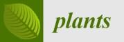 Plants_Logo