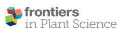 frontiers-in-plant-sciences